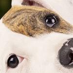 News Tierschutzshop