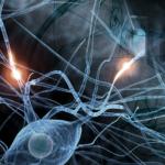 Alpha07 Synapsen
